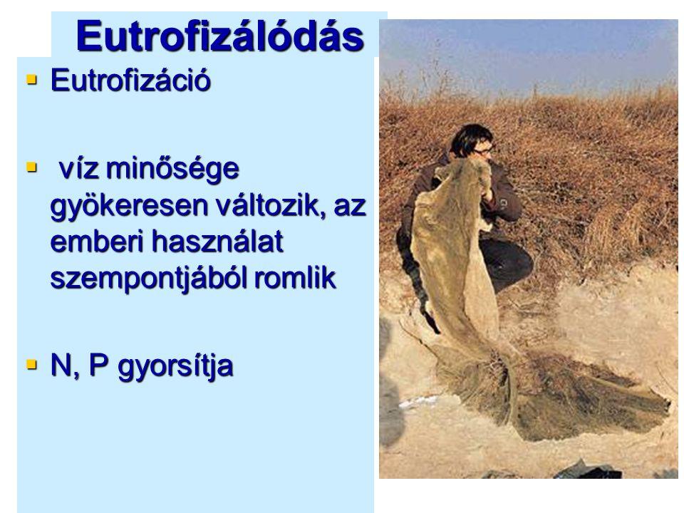 Eutrofizálódás Eutrofizáció