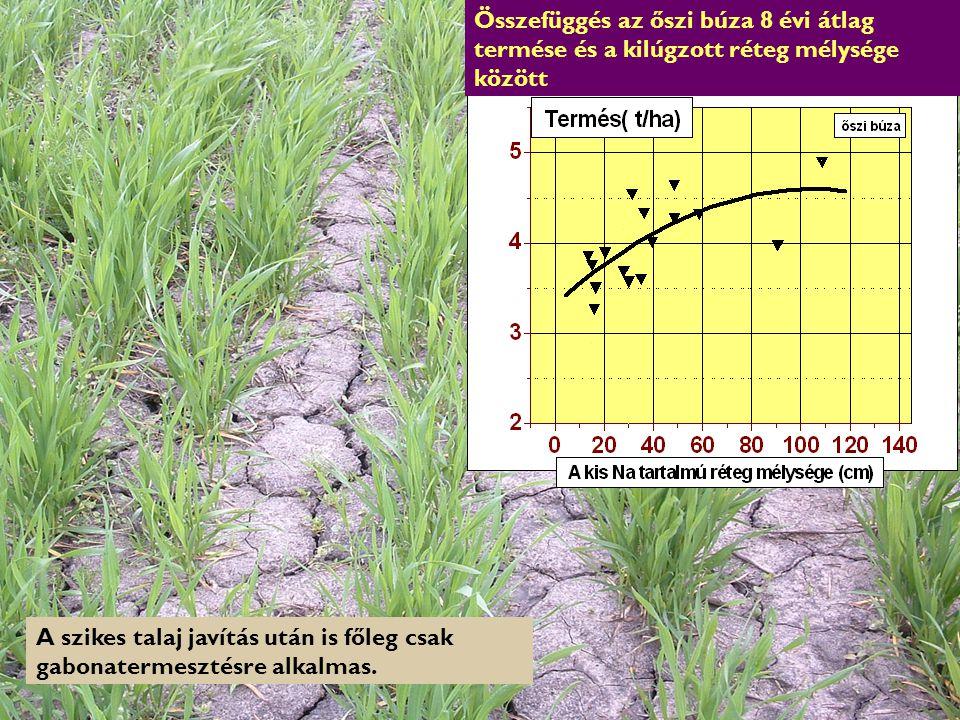 A szikes talaj javítás után is főleg csak gabonatermesztésre alkalmas.