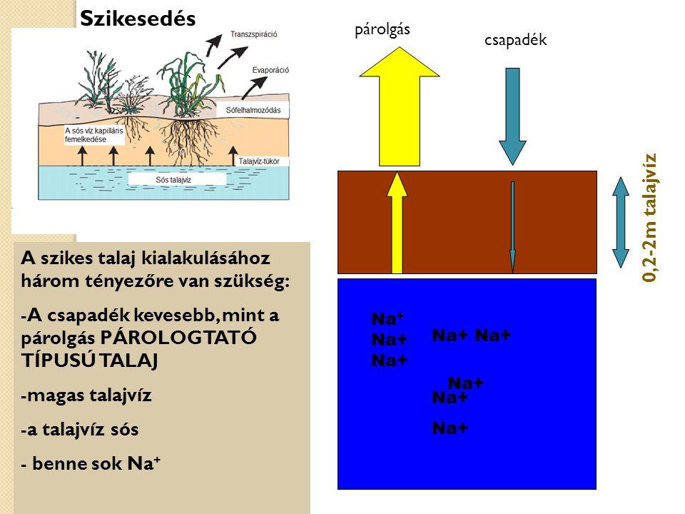 Szikesedés 0,2-2m talajvíz