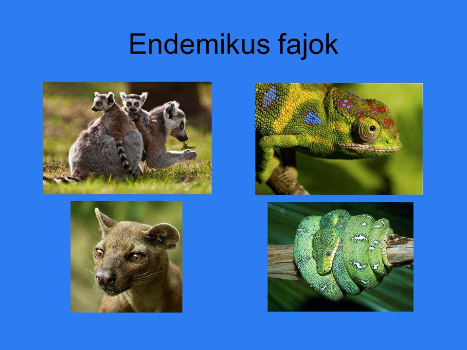 Endemikus fajok