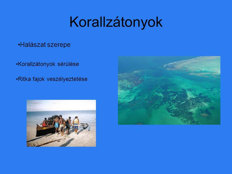 Korallzátonyok Halászat szerepe Korallzátonyok sérülése