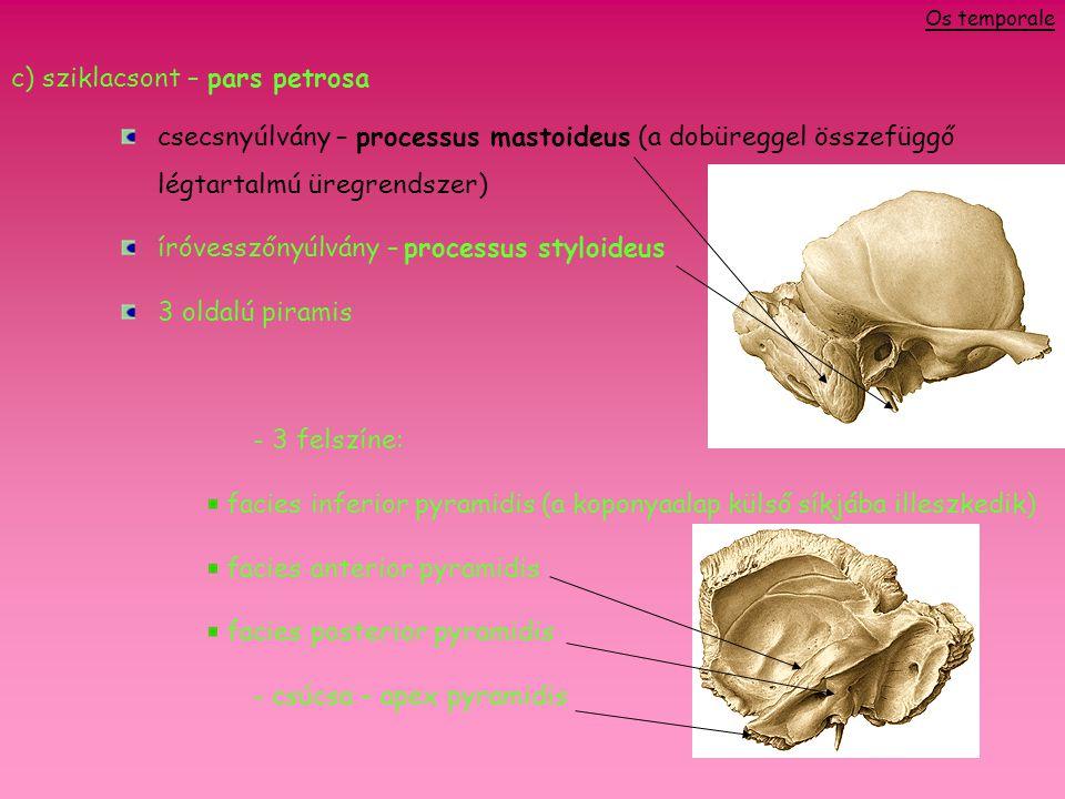 c) sziklacsont – pars petrosa