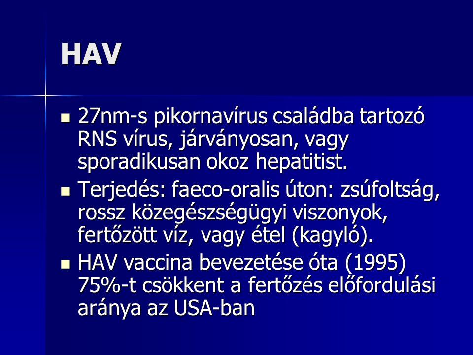 HAV 27nm-s pikornavírus családba tartozó RNS vírus, járványosan, vagy sporadikusan okoz hepatitist.