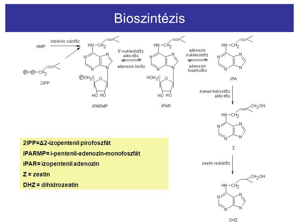 Bioszintézis 2i 2iPP 2iPP=Δ2-izopentenil pirofoszfát