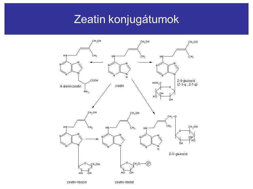 Zeatin konjugátumok