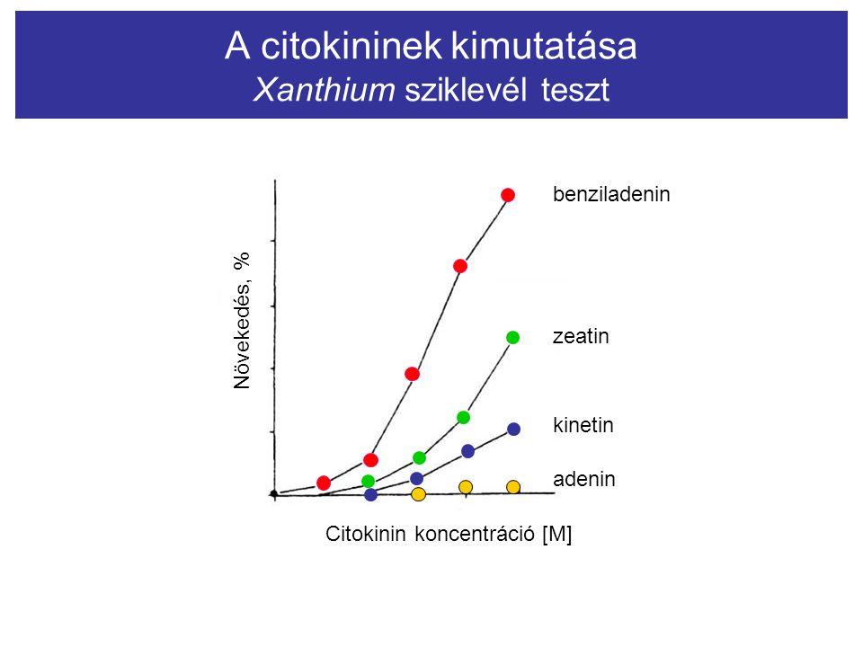 A citokininek kimutatása Xanthium sziklevél teszt