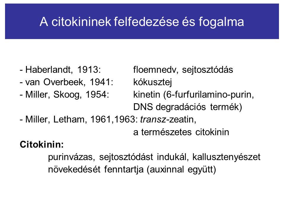 A citokininek felfedezése és fogalma