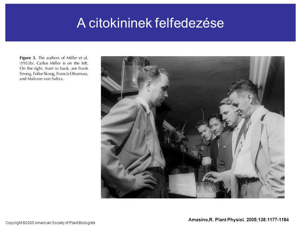 A citokininek felfedezése