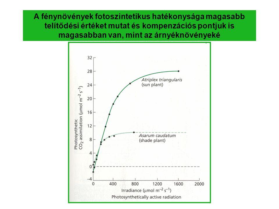 A fénynövények fotoszintetikus hatékonysága magasabb telítődési értéket mutat és kompenzációs pontjuk is magasabban van, mint az árnyéknövényeké