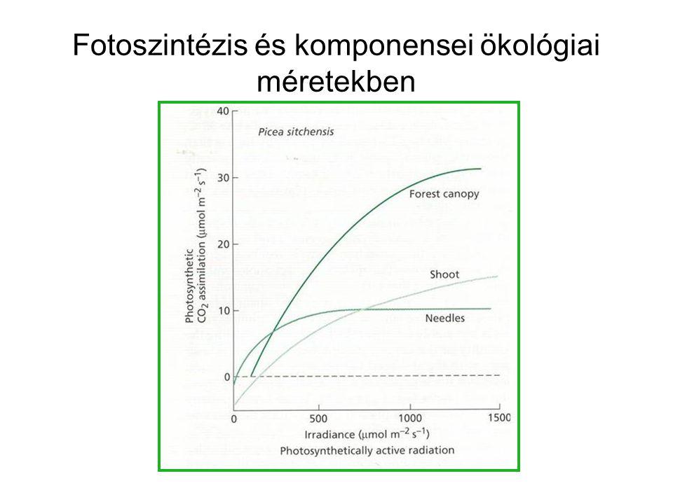 Fotoszintézis és komponensei ökológiai méretekben