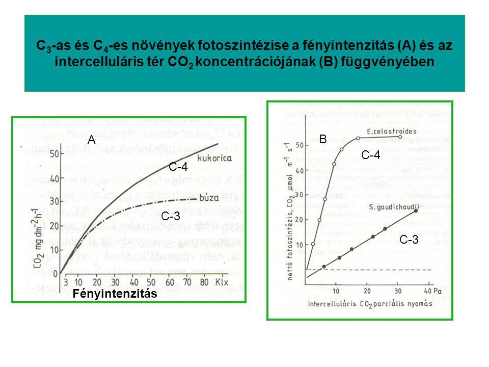 C3-as és C4-es növények fotoszintézise a fényintenzitás (A) és az intercelluláris tér CO2 koncentrációjának (B) függvényében