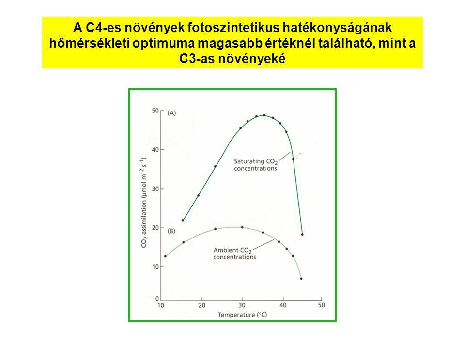 A C4-es növények fotoszintetikus hatékonyságának hőmérsékleti optimuma magasabb értéknél található, mint a C3-as növényeké