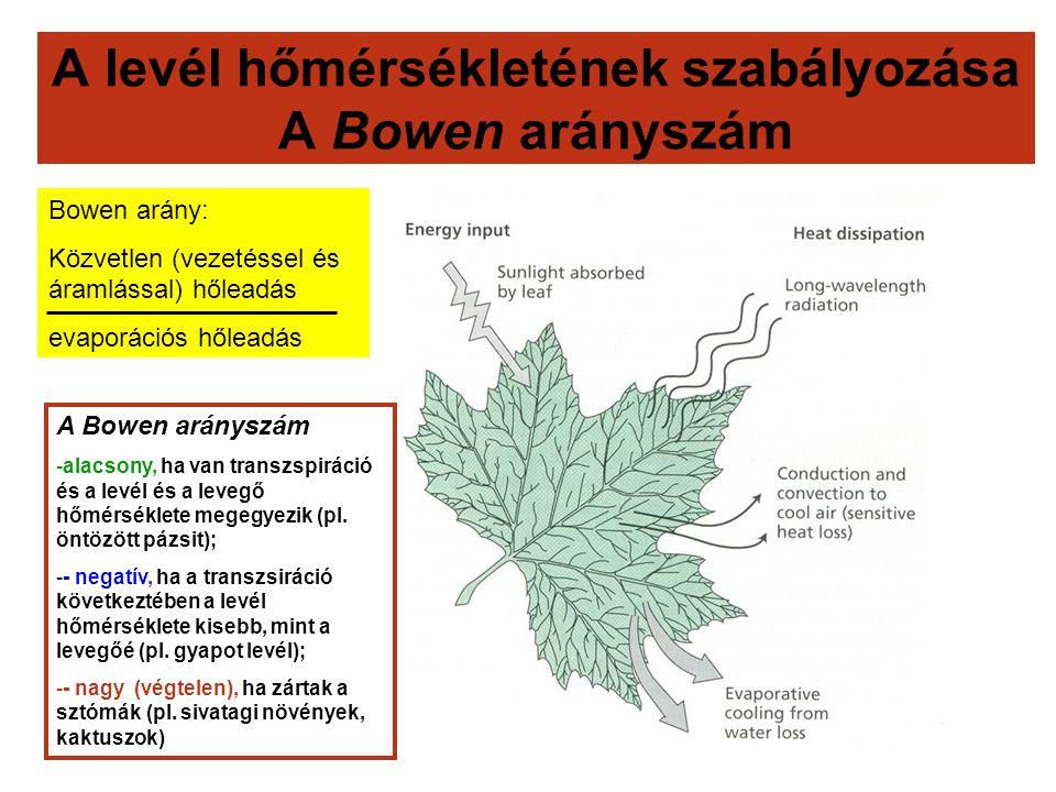 A levél hőmérsékletének szabályozása A Bowen arányszám