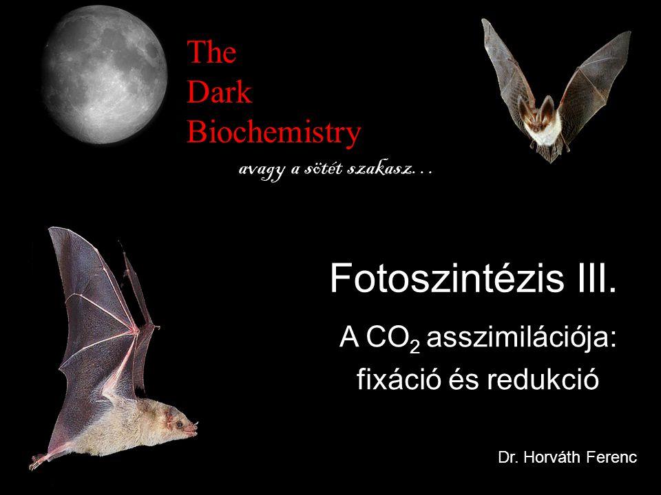 Fotoszintézis III. The Dark Biochemistry A CO2 asszimilációja: