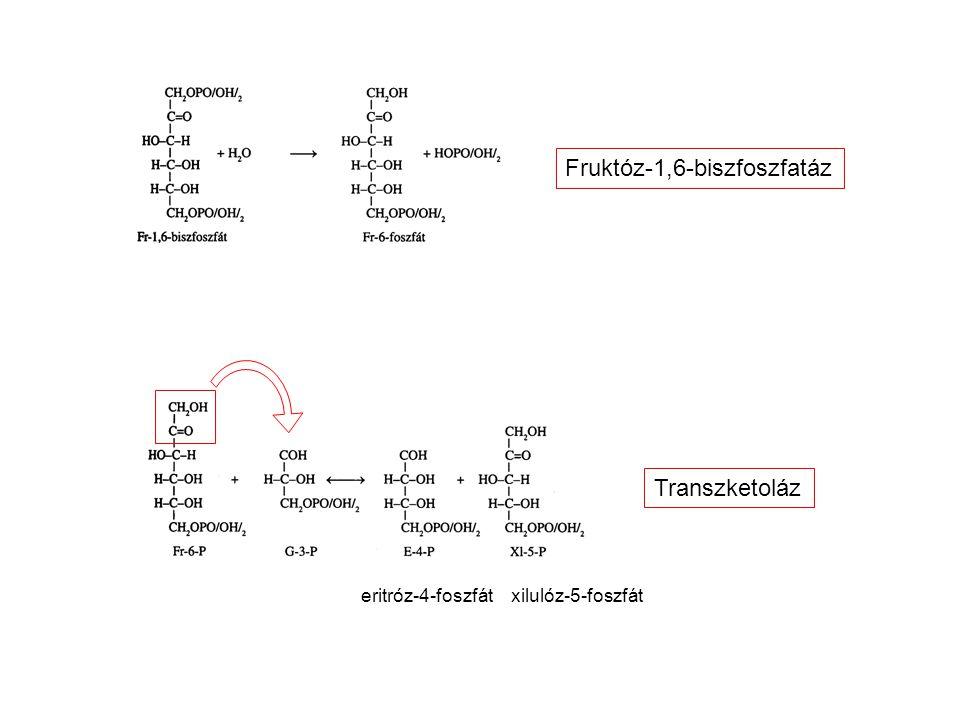 Fruktóz-1,6-biszfoszfatáz