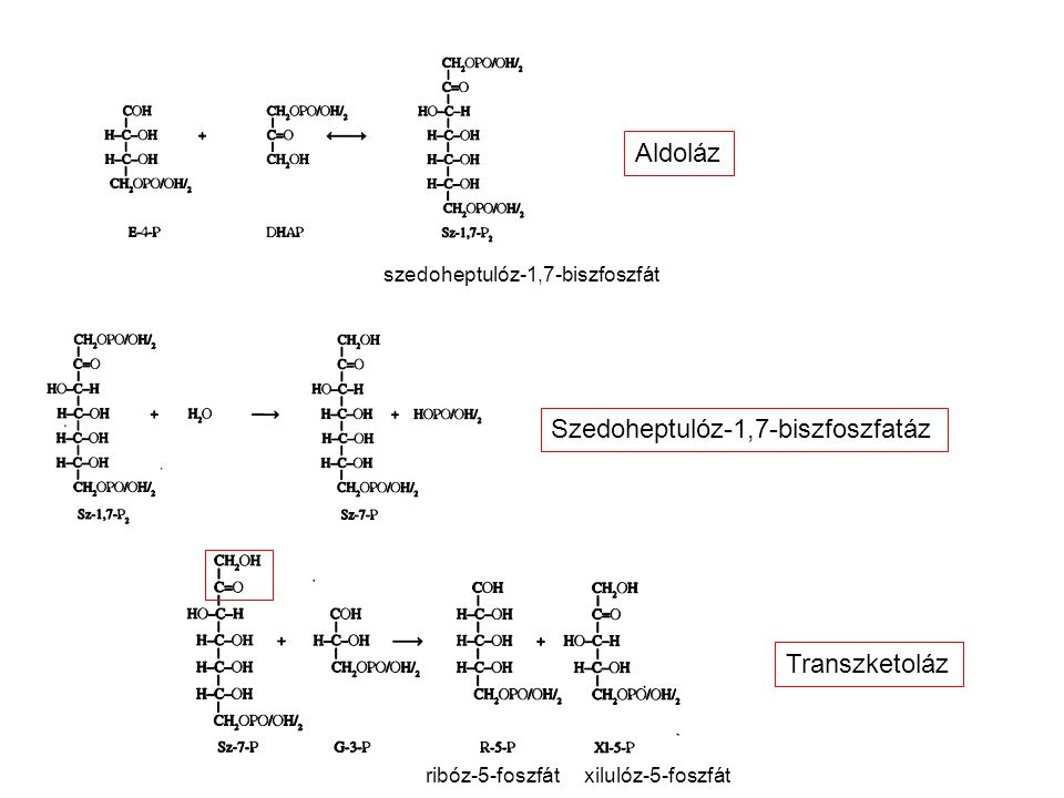 Szedoheptulóz-1,7-biszfoszfatáz