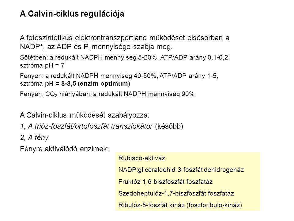 A Calvin-ciklus regulációja