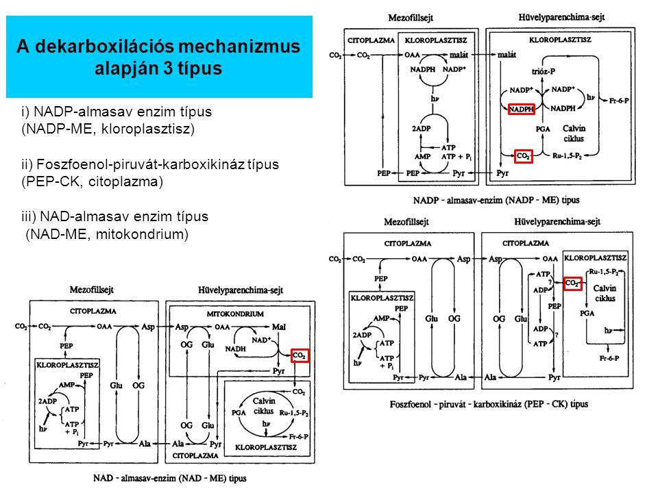 A dekarboxilációs mechanizmus alapján 3 típus