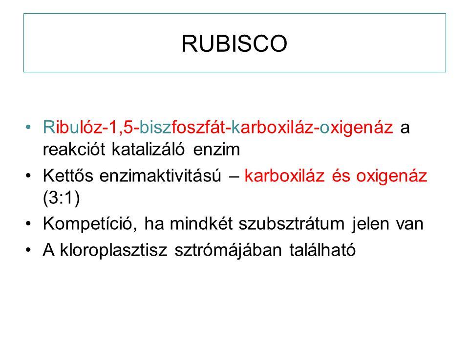 RUBISCO Ribulóz-1,5-biszfoszfát-karboxiláz-oxigenáz a reakciót katalizáló enzim. Kettős enzimaktivitású – karboxiláz és oxigenáz (3:1)