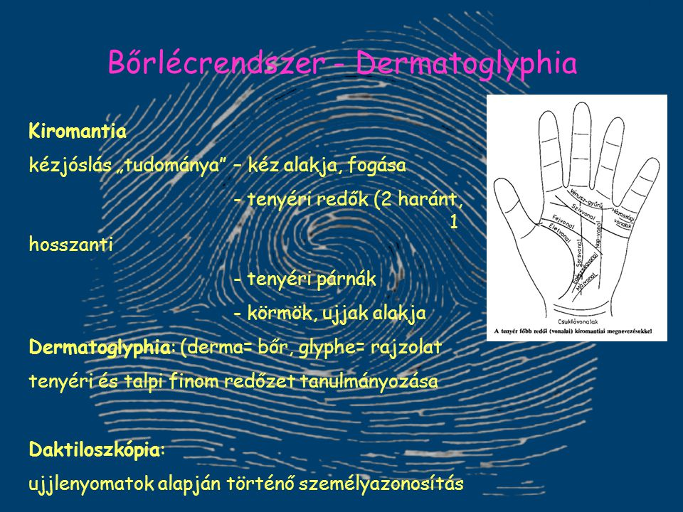 Bőrlécrendszer - Dermatoglyphia