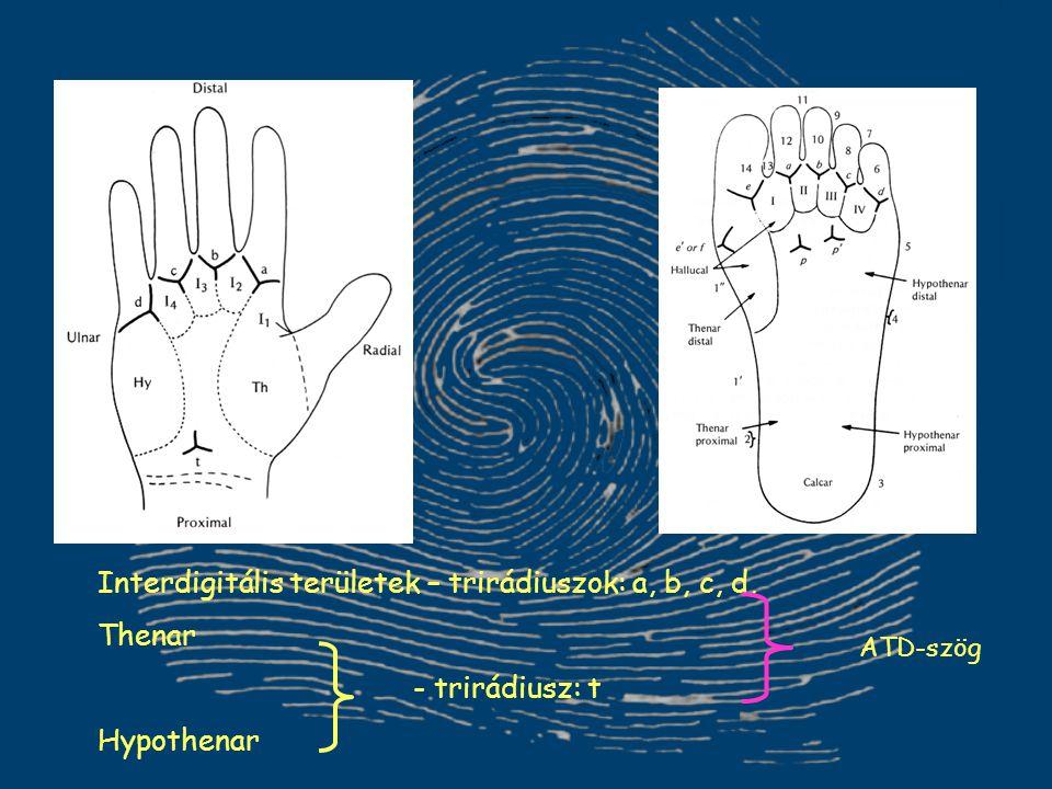 Interdigitális területek – trirádiuszok: a, b, c, d, Thenar