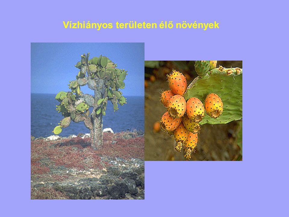 Vízhiányos területen élő növények