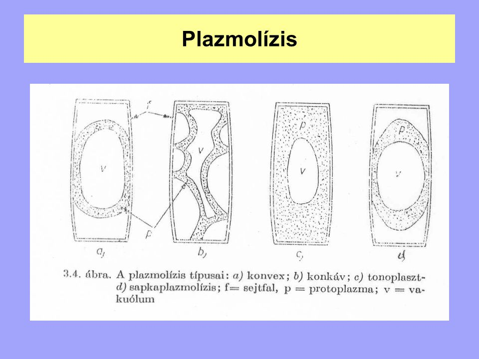 Plazmolízis