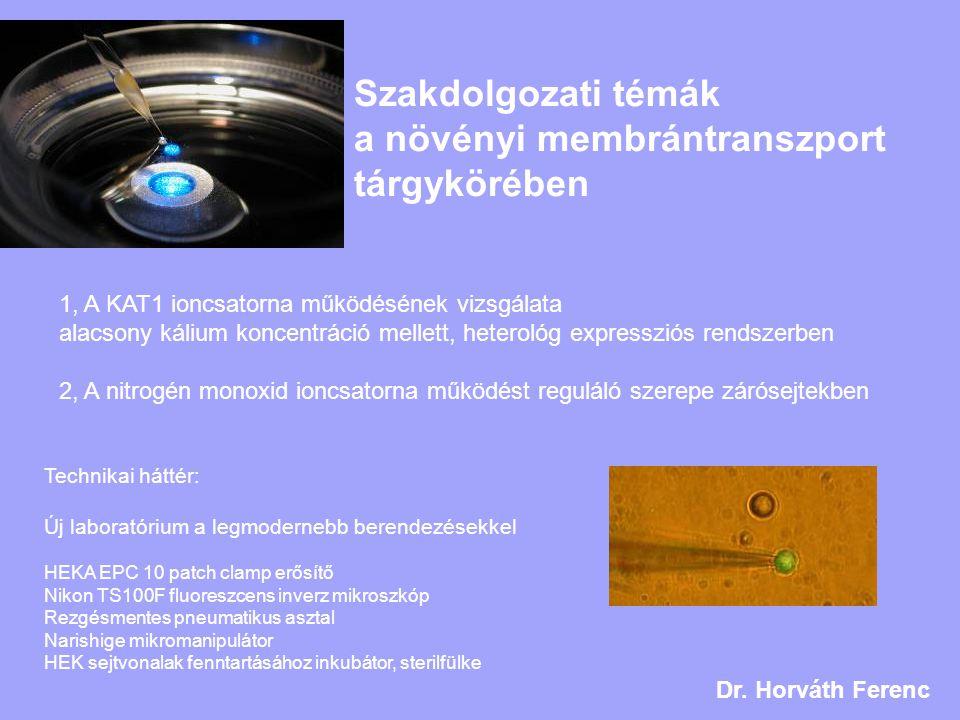 Szakdolgozati témák a növényi membrántranszport tárgykörében
