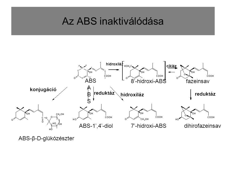 Az ABS inaktiválódása ABS 8'-hidroxi-ABS fazeinsav ABS ABS-1',4'-diol
