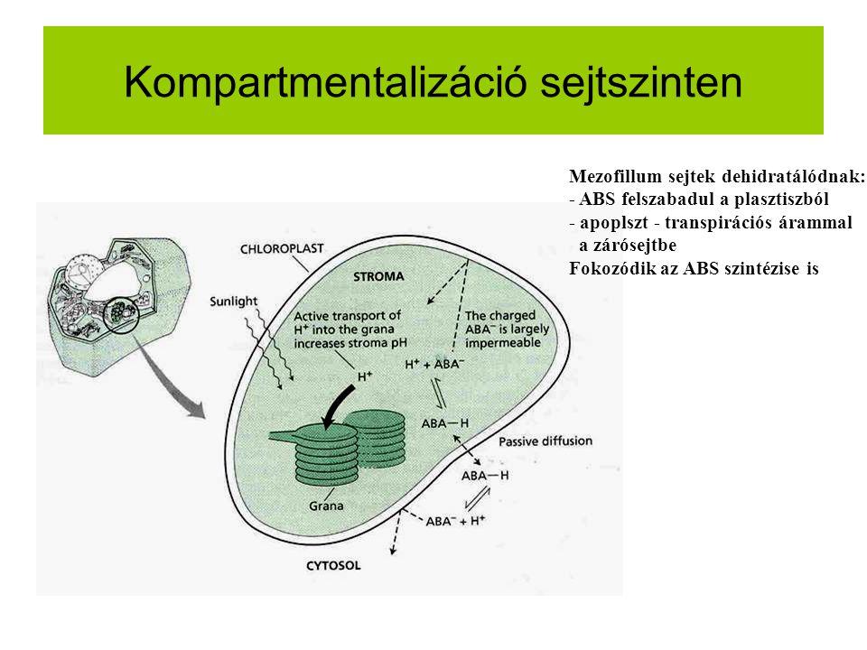 Kompartmentalizáció sejtszinten