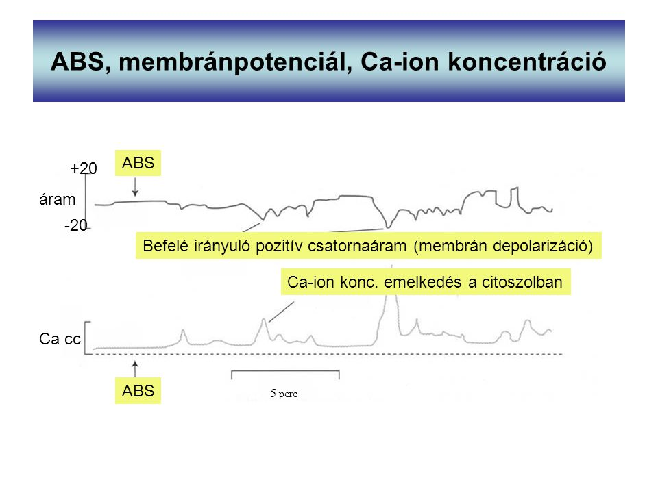 ABS, membránpotenciál, Ca-ion koncentráció