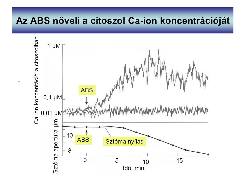 Az ABS növeli a citoszol Ca-ion koncentrációját