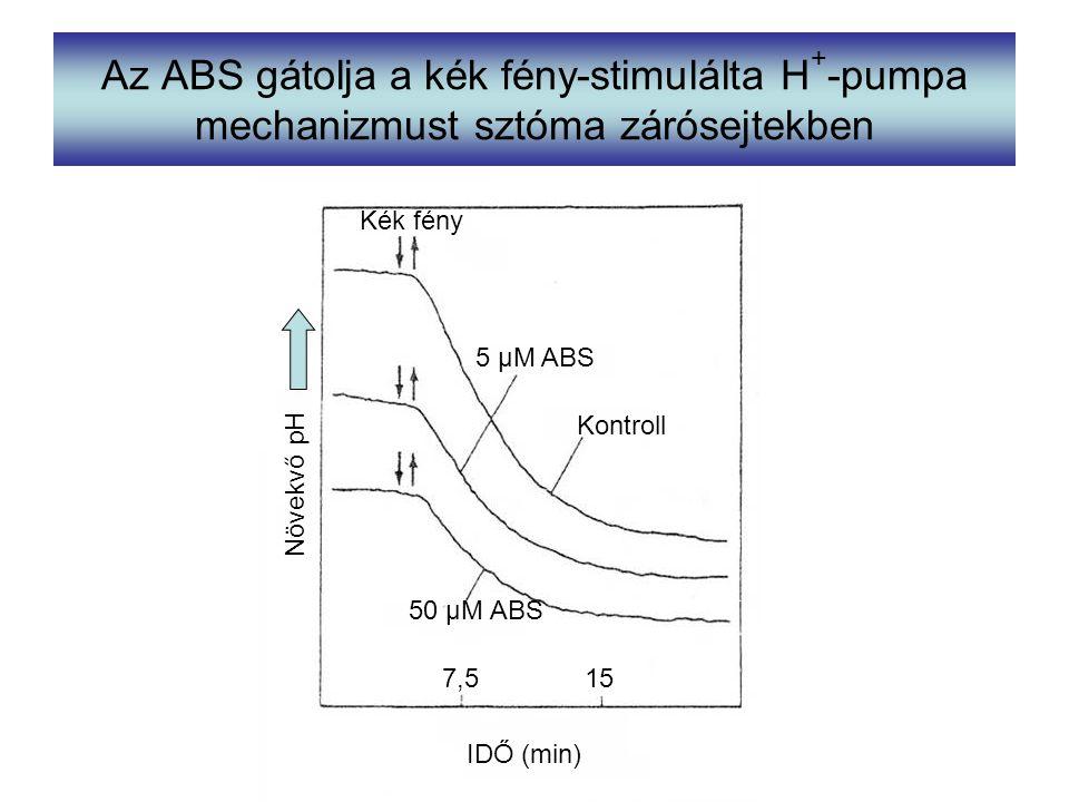 Az ABS gátolja a kék fény-stimulálta H+-pumpa mechanizmust sztóma zárósejtekben