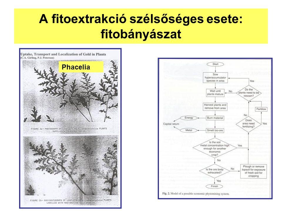 A fitoextrakció szélsőséges esete: fitobányászat