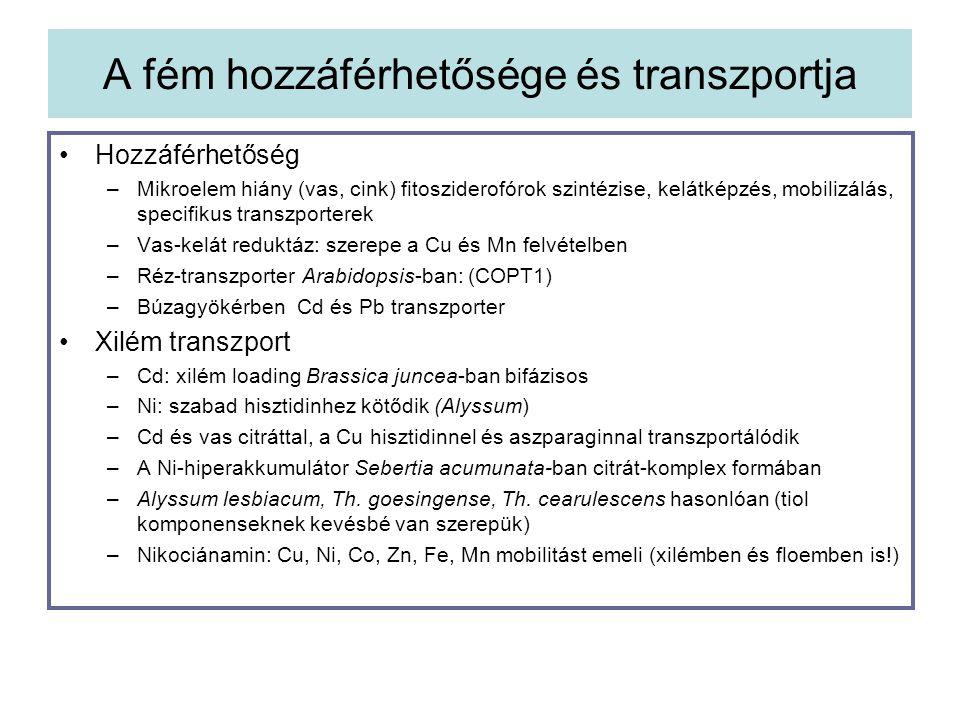A fém hozzáférhetősége és transzportja