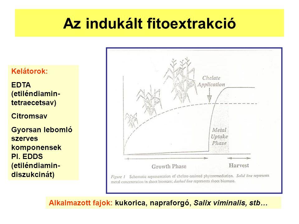 Az indukált fitoextrakció