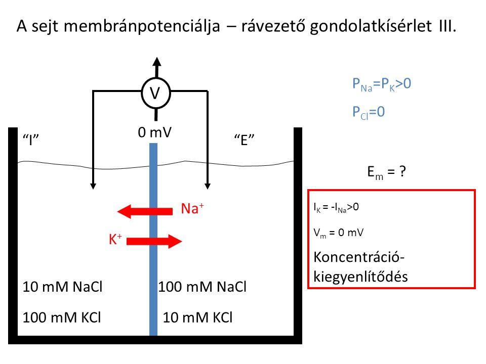 A sejt membránpotenciálja – rávezető gondolatkísérlet III.