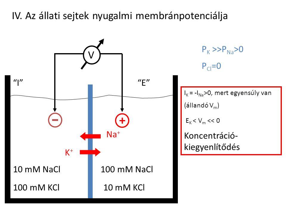 + IV. Az állati sejtek nyugalmi membránpotenciálja V
