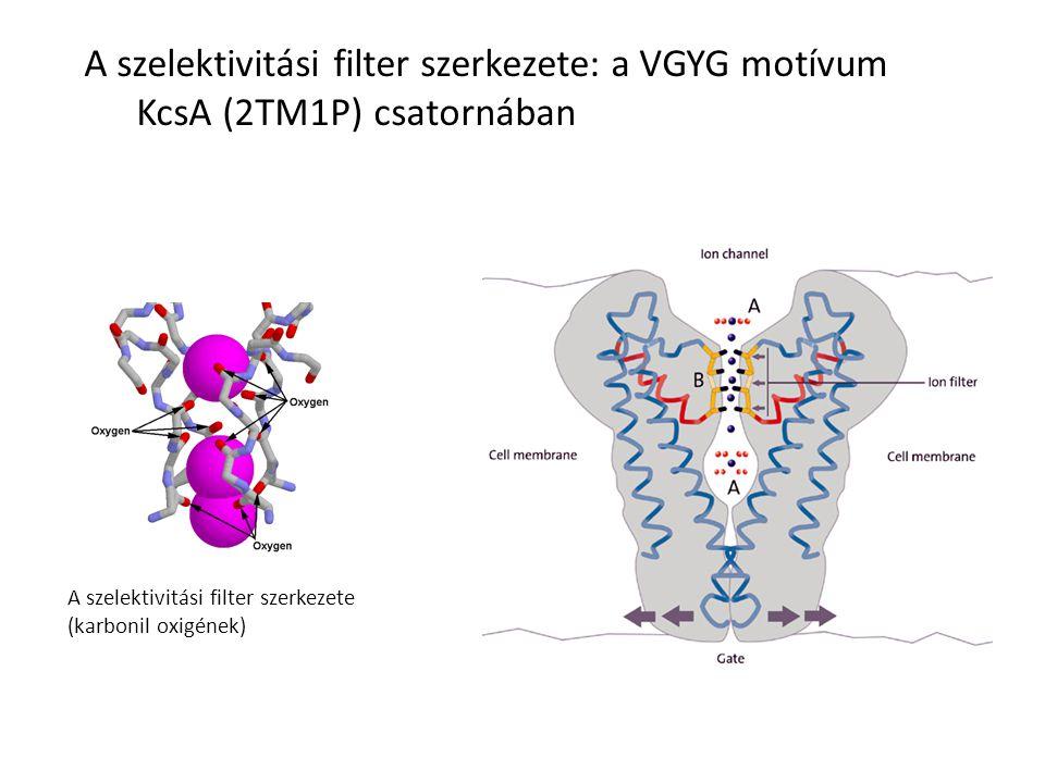 A szelektivitási filter szerkezete: a VGYG motívum KcsA (2TM1P) csatornában