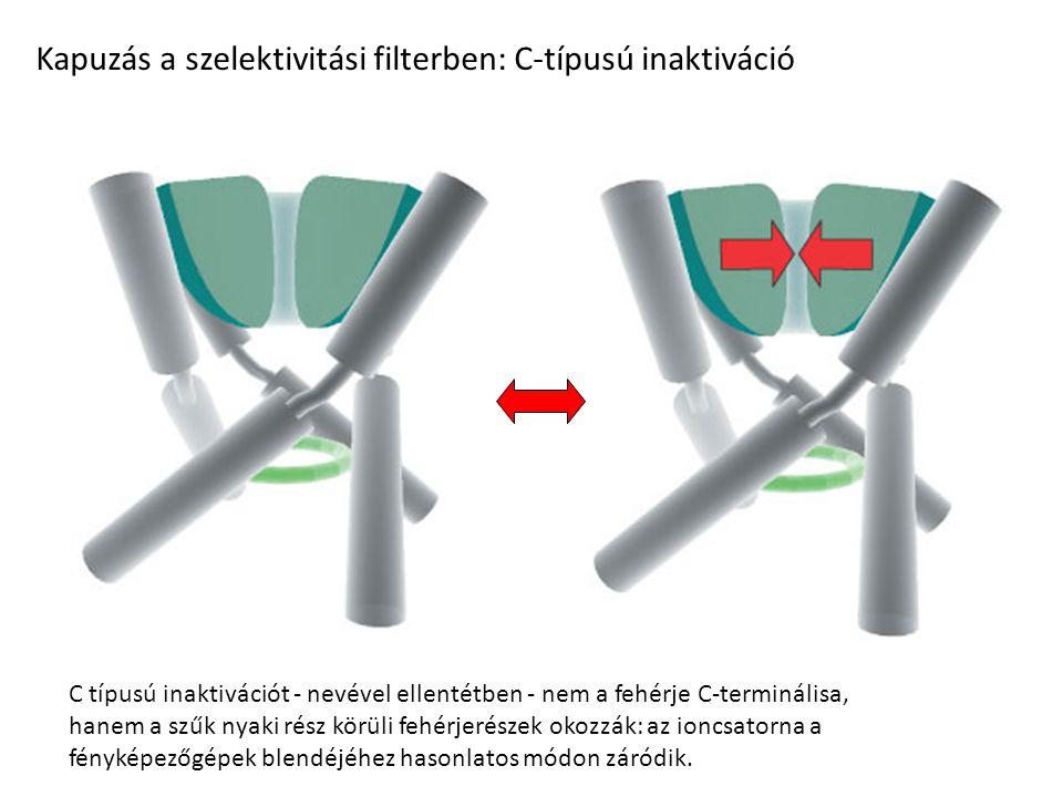 Kapuzás a szelektivitási filterben: C-típusú inaktiváció