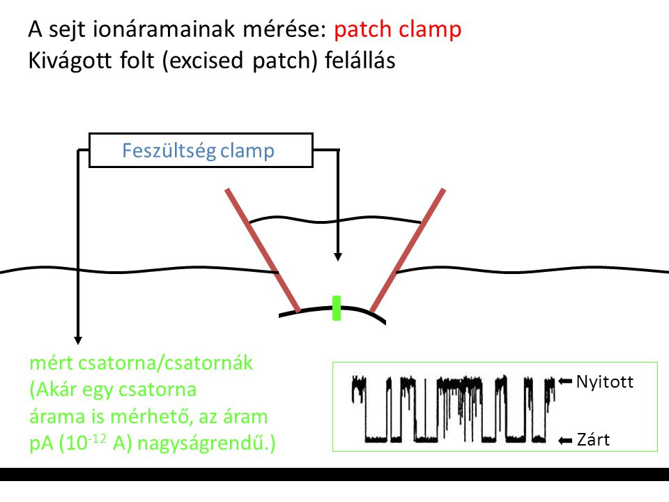 A sejt ionáramainak mérése: patch clamp