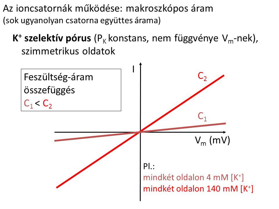 Az ioncsatornák működése: makroszkópos áram