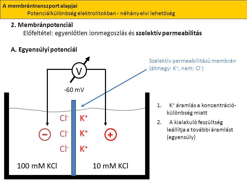 V + Cl- K+ Cl- K+ Cl- K+ 100 mM KCl 10 mM KCl