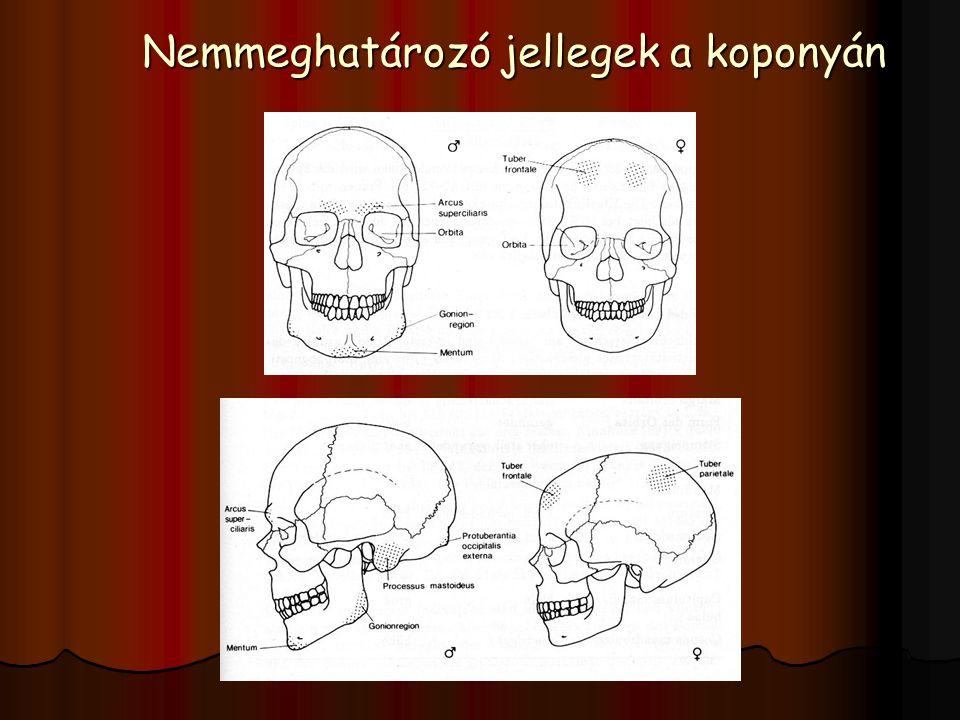 Nemmeghatározó jellegek a koponyán