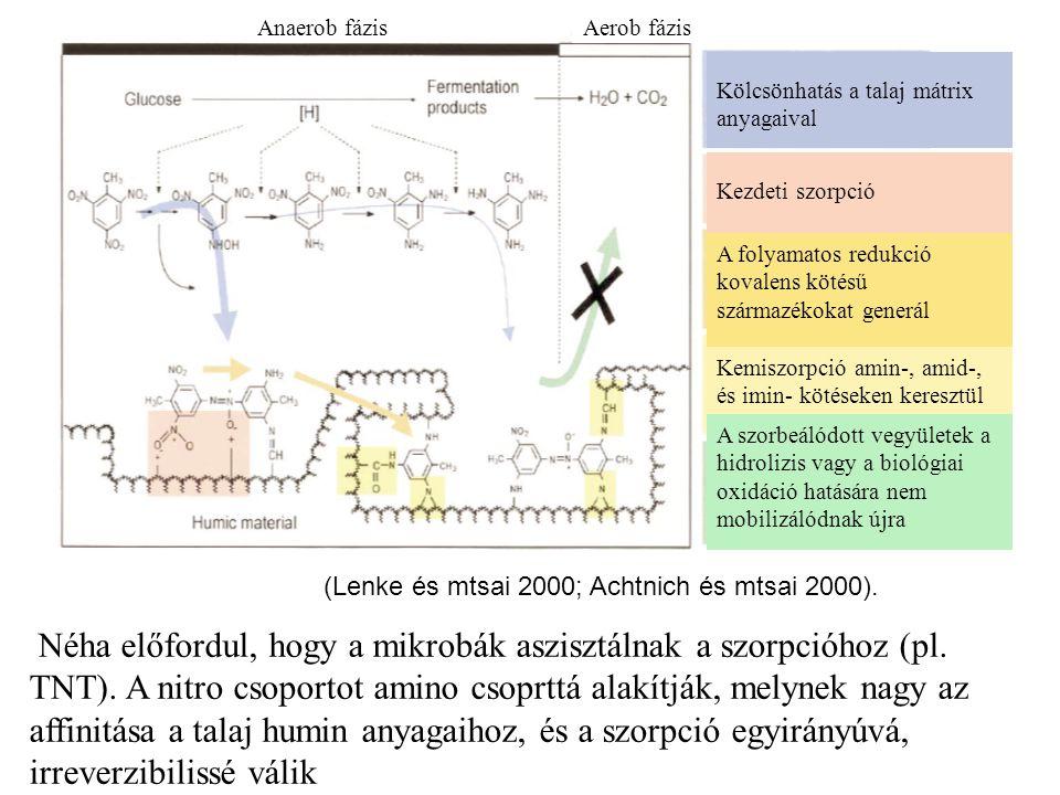 Anaerob fázis Aerob fázis. Kölcsönhatás a talaj mátrix anyagaival. Kezdeti szorpció. Kemiszorpció amin-, amid-, és imin- kötéseken keresztül.