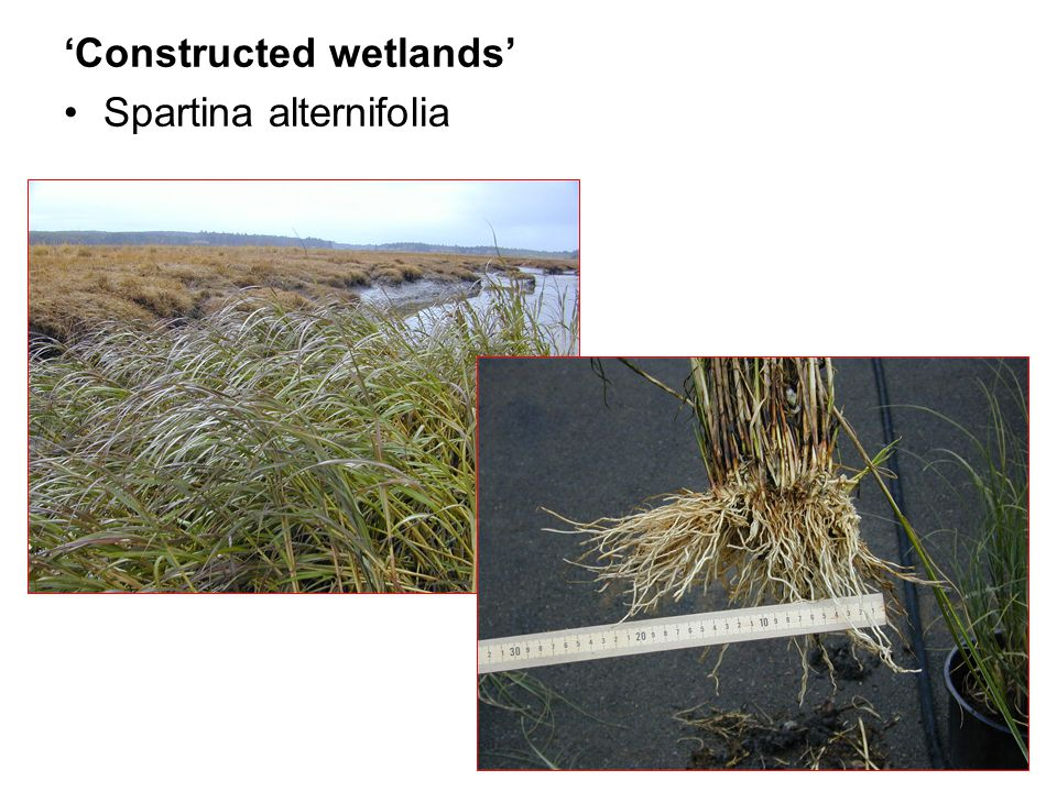 'Constructed wetlands'