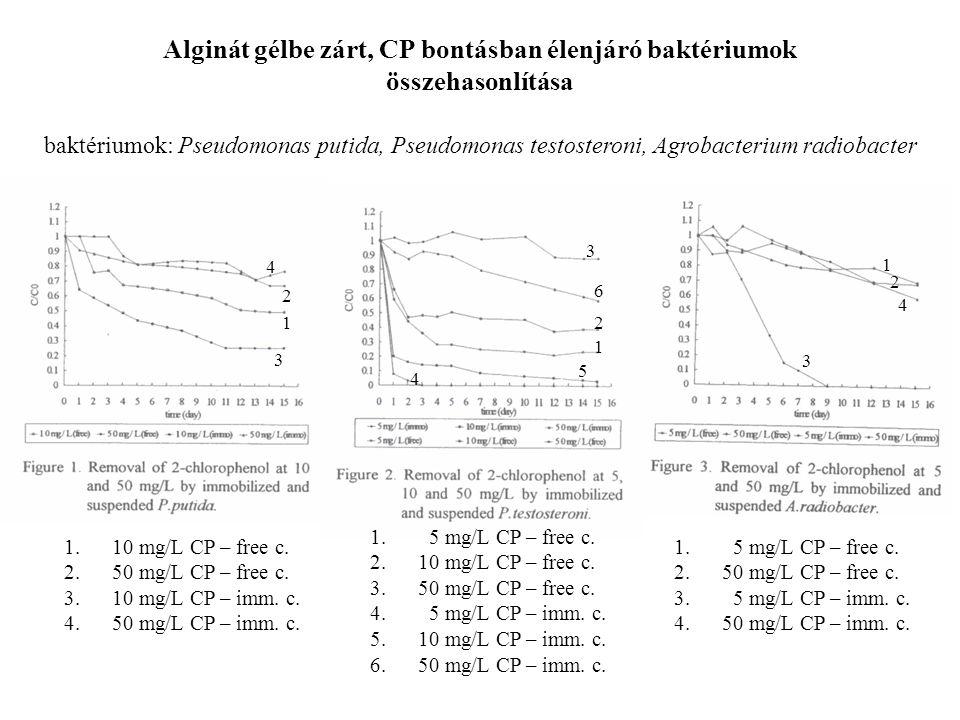 Alginát gélbe zárt, CP bontásban élenjáró baktériumok összehasonlítása