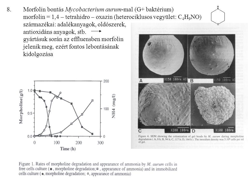 Morfolin bontás Mycobacterium aurum-mal (G+ baktérium) morfolin = 1,4 – tetrahidro – oxazin (heterociklusos vegyület: C4H9NO) származékai: adalékanyagok, oldószerek, antioxidáns anyagok, stb.