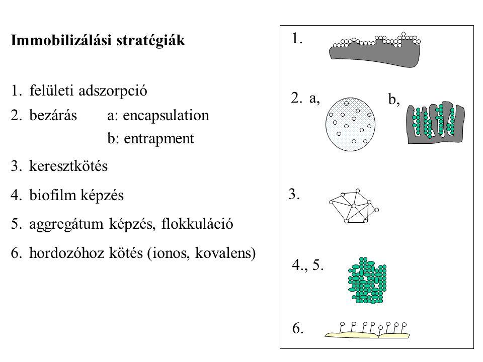 Immobilizálási stratégiák