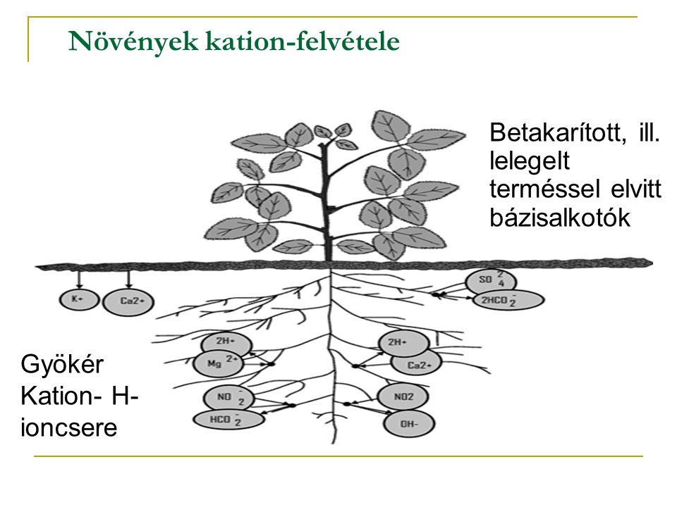 Növények kation-felvétele